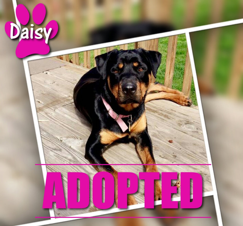 Daisy Adopted May 2017