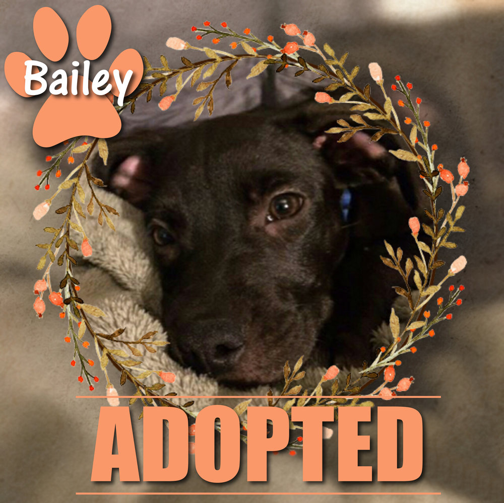 Bailey Adopted August 2017