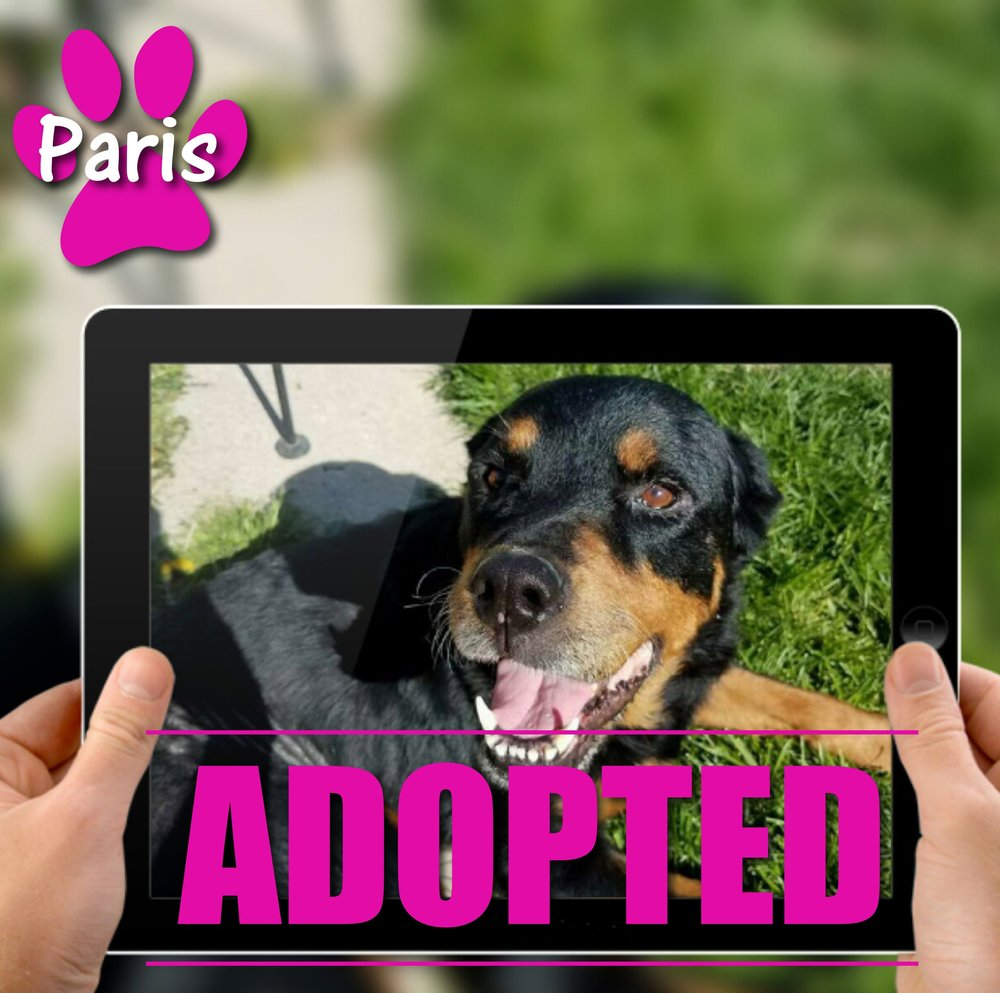 Paris Adopted May 2017