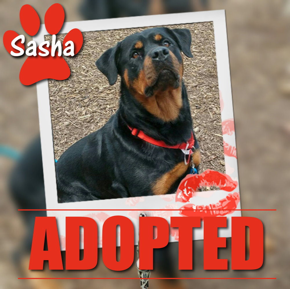 Sasha Adopted September 2017