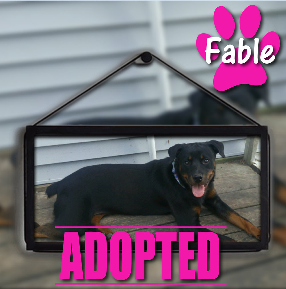 Fable Adopted September 2017