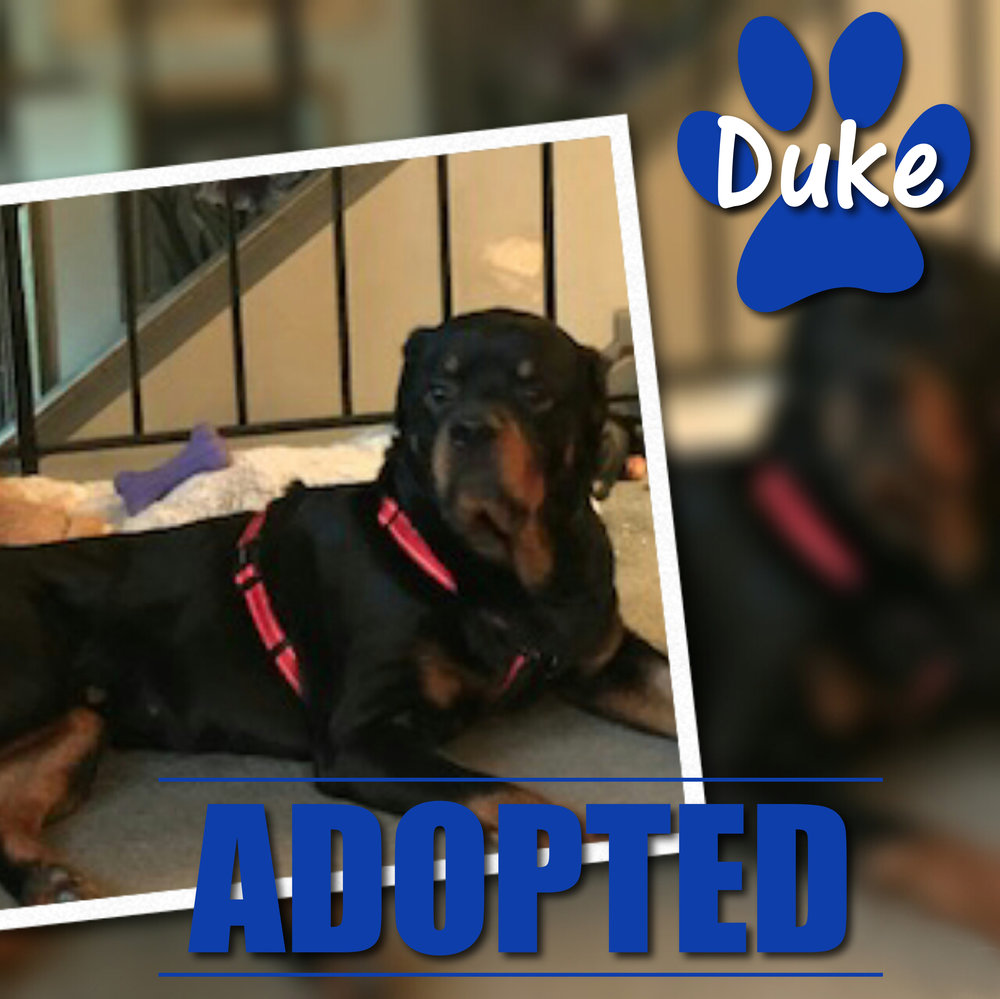 Duke Adopted September 2017
