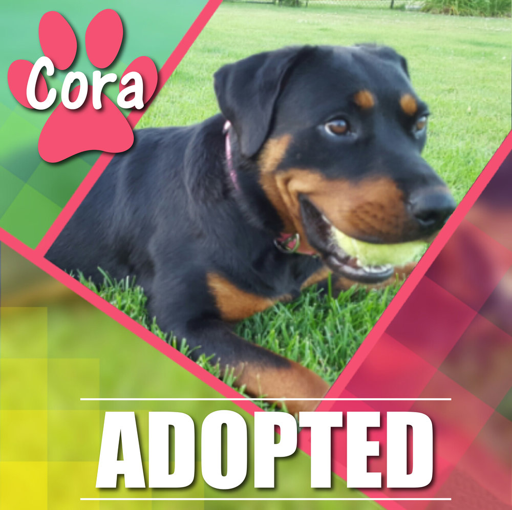 Cora  Adopted August 2017