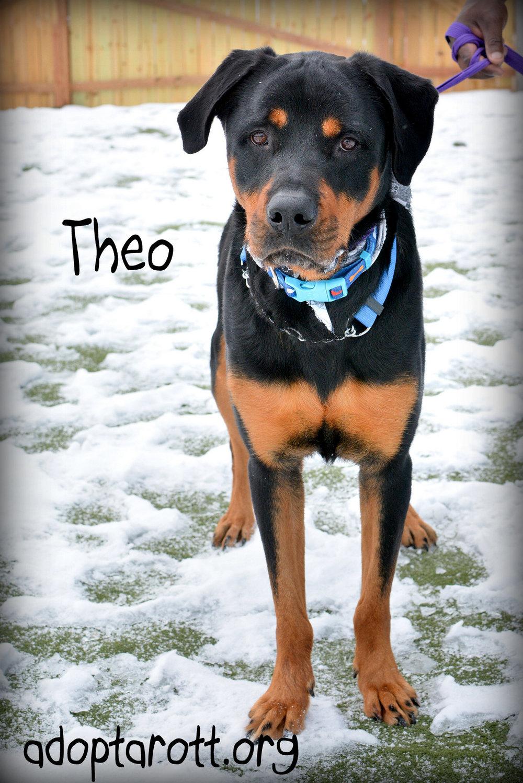Theo5.jpg