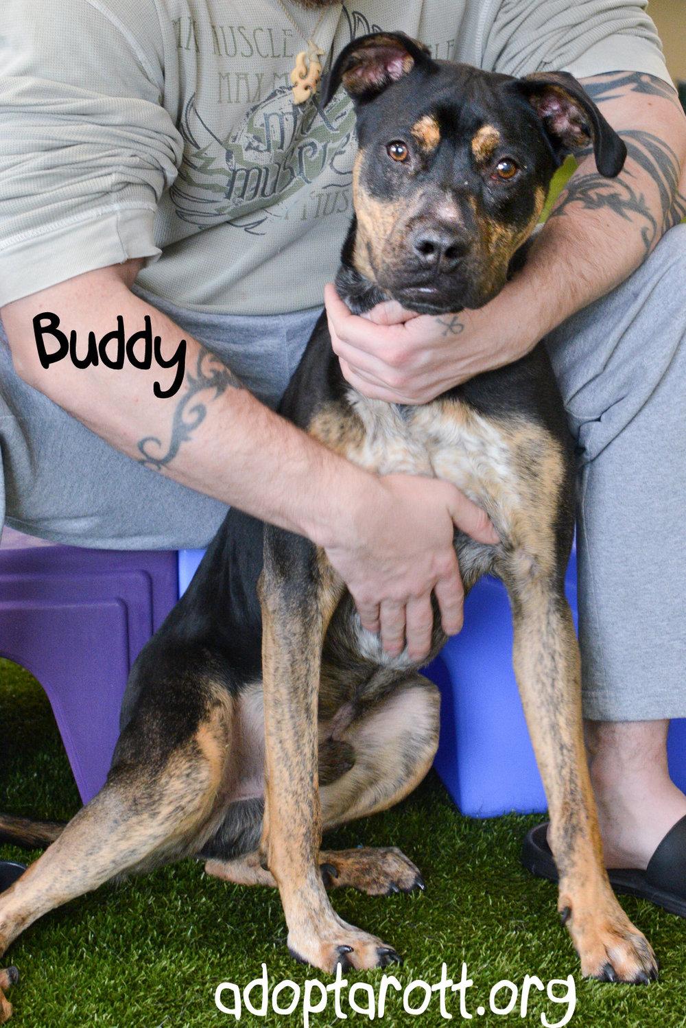 Buddy5.jpg