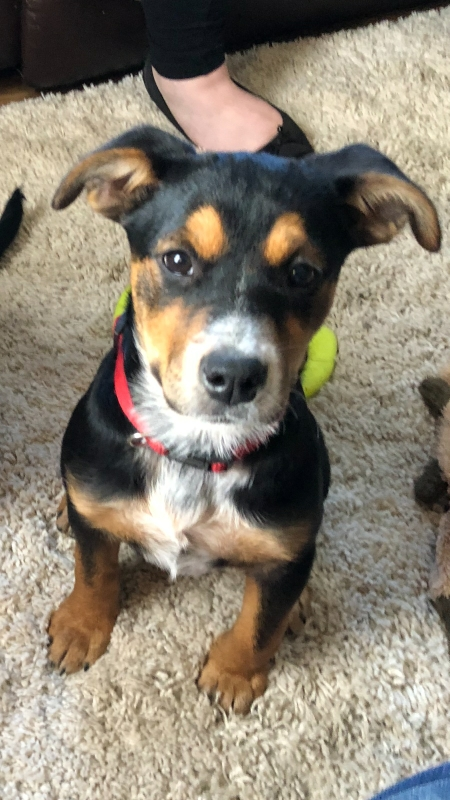 Allie <br>6 Month Old Female<br>Available for Adoption