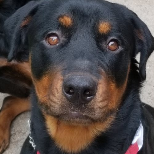 Ike<br />1 Year Old Male<br />Available for Adoption