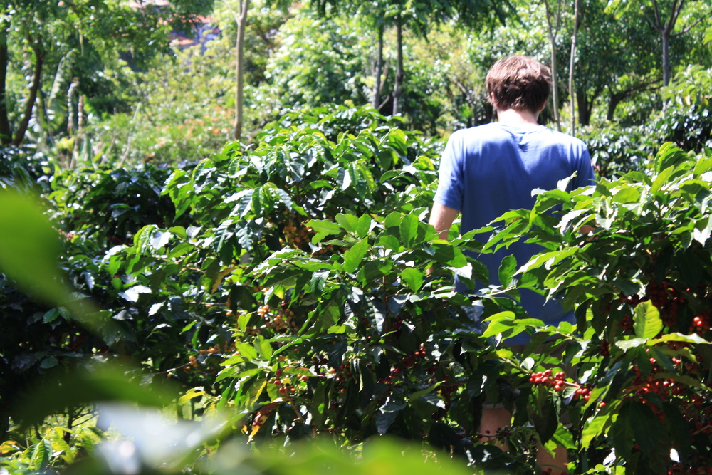 coffee seems to grow in exclusively beautiful, exotic, serene locations. this finca was no different, as you see me covered in acres of almost-ripe yellow bourbon and red bourbon. breath-taking and beautiful.