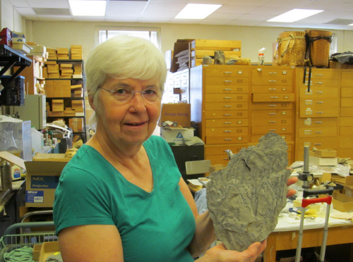 UNC-Chapel Hill professor and paleobotanist Dr. Patricia Gensel holding a plant fossil. Photo courtesy of Dr. Gensel.