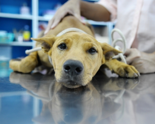 Companion animal medicine is one of the most popular fields of veterinary medicine. Source: Flickr Media