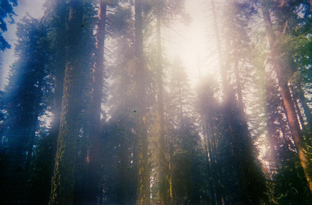 JAW_SequoiaFilm-22ps.jpg