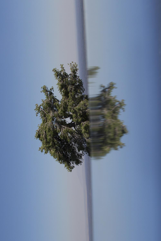 tree_final_1_small.jpg