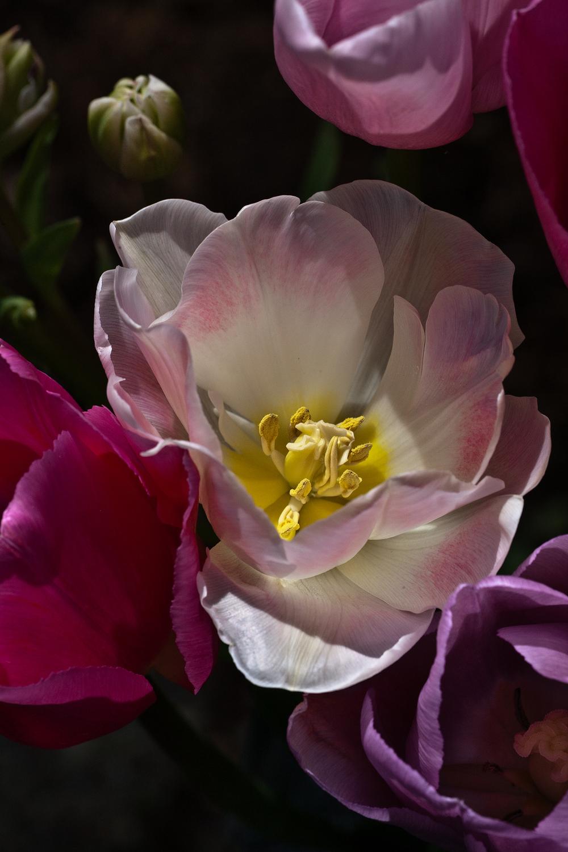 20100418_tulips_seattle_wa_0076_Web_SS_1200.jpg