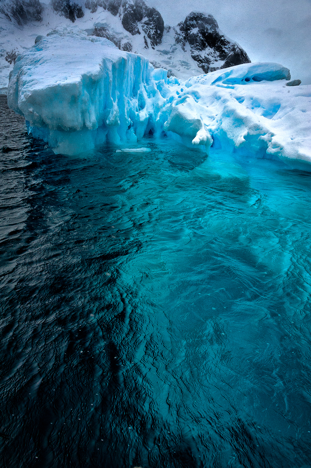 20111206_antarctica_6845_Web_SS_1200.jpg