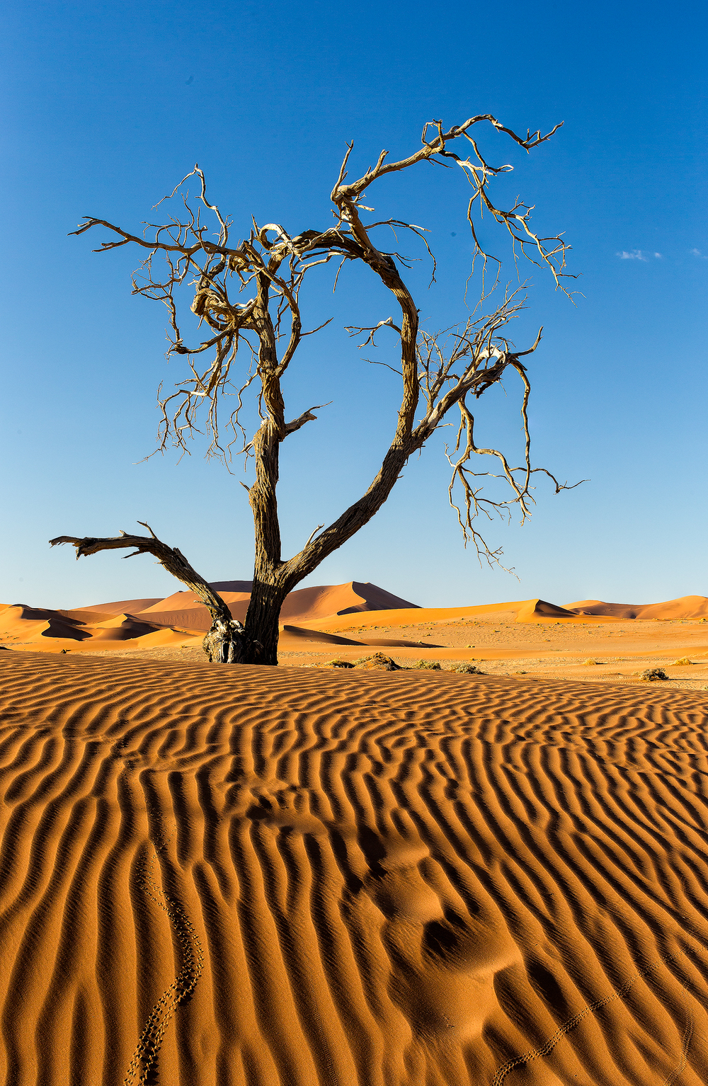 20140405_Namibia_sossusvlei_1418_Web_SS_1200.jpg