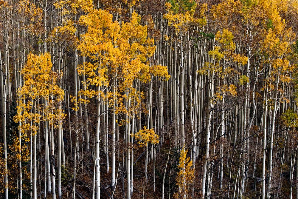 Summit Creek, San Miguel County, Colorado