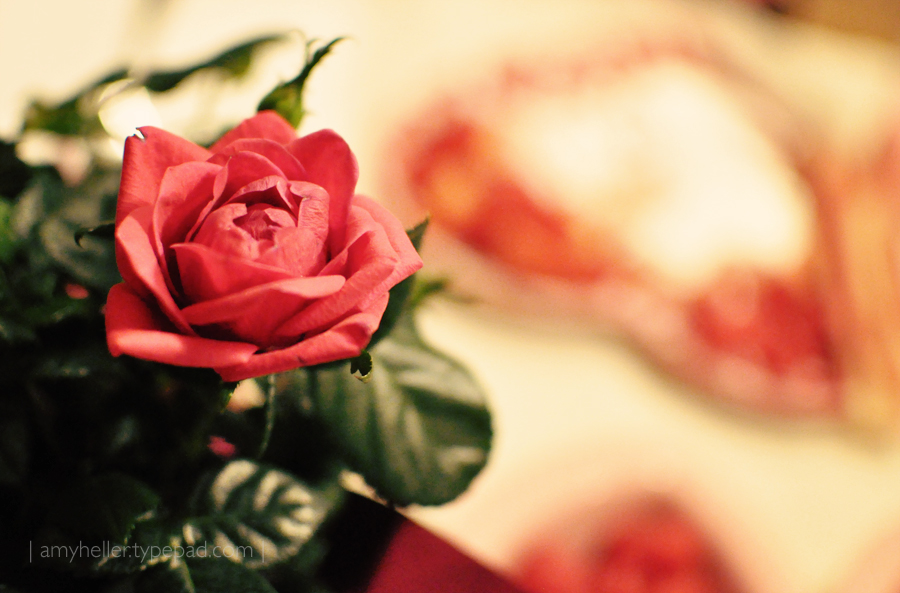 2011_Val_rose