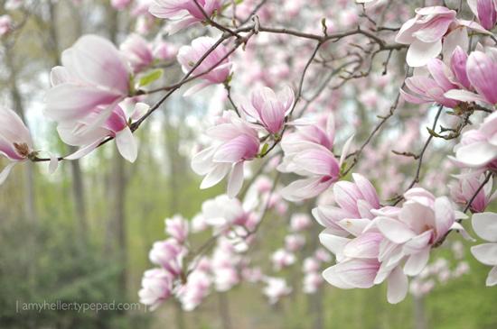 Spring_2011_2