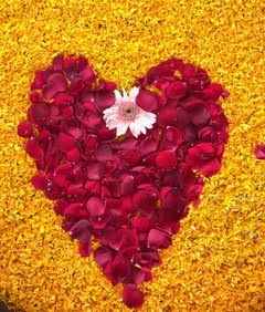 Flower petal display on Valentine's Day