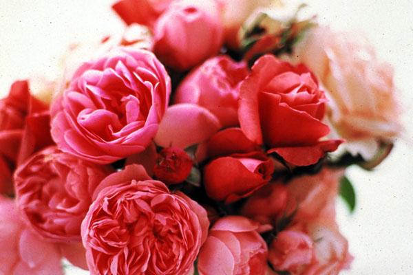 floraldesign.8.jpg