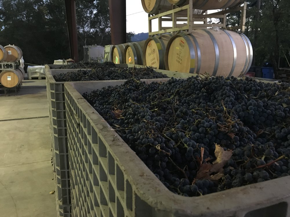Night picked Cabernet Sauvignon
