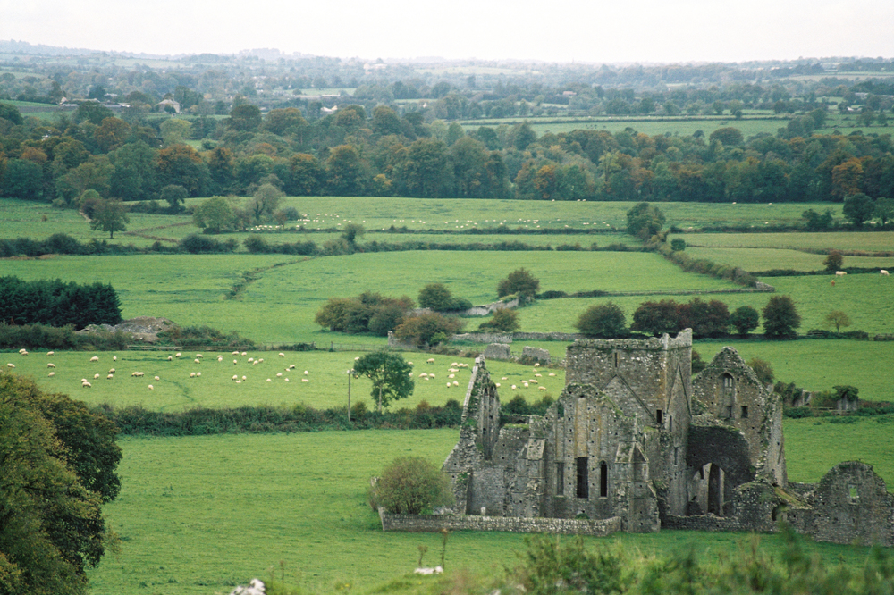 Film photograph: Sheep may Safely Graze; Cashel, Republic of Ireland