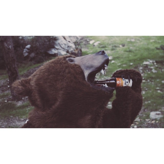 Head over to our site to gander our newest @newbelgium spot! Featuring a friendly beer drinking bear! #newbelgium #bearswithbeer #setlife #commercial