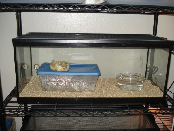 A very simplistic yet effective ball python enclosure