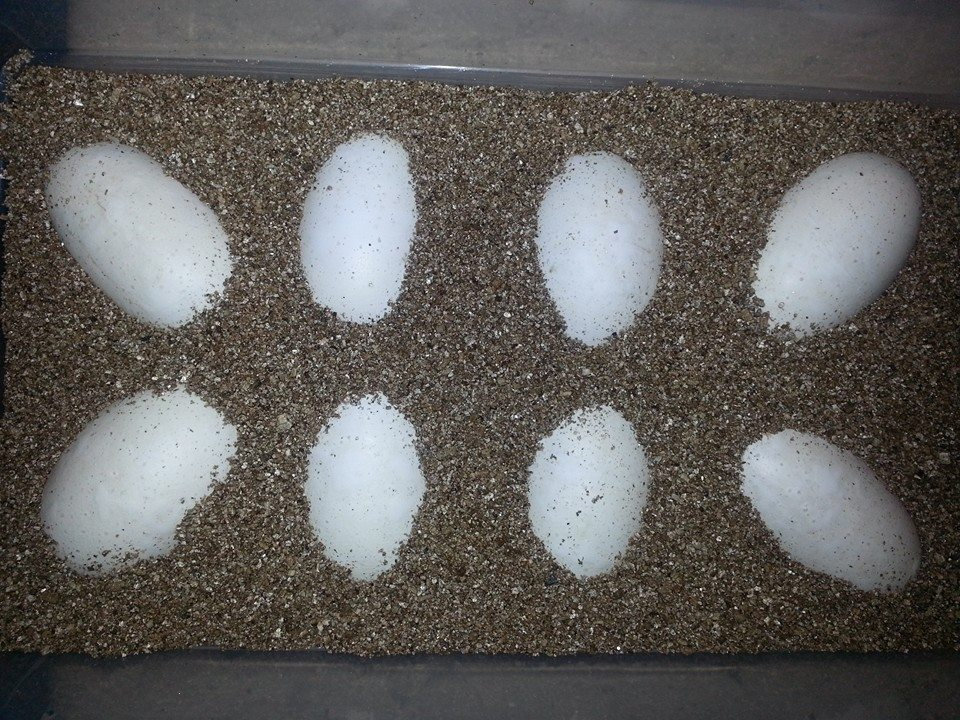 Vermiculite as an incubation medium