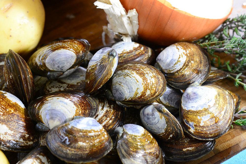Seafood-Clams-DSC_2667.jpg