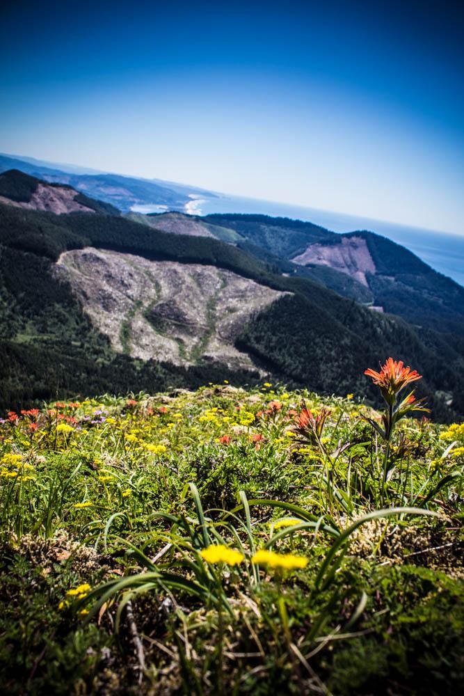 Angora Peak Wild Flowers