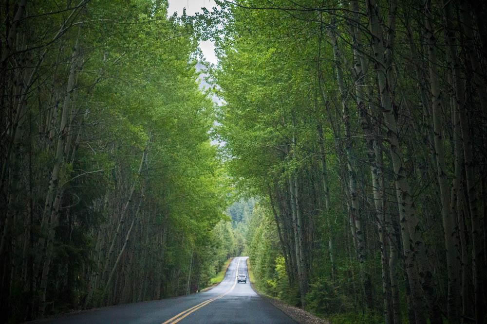 Tree tunnels, White Pass