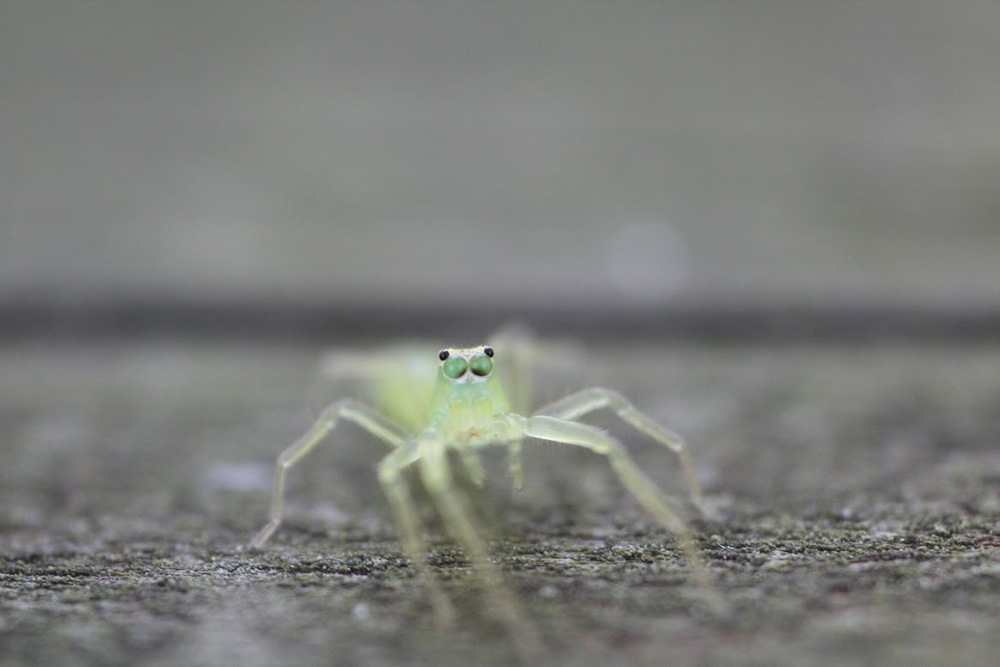 A green insect