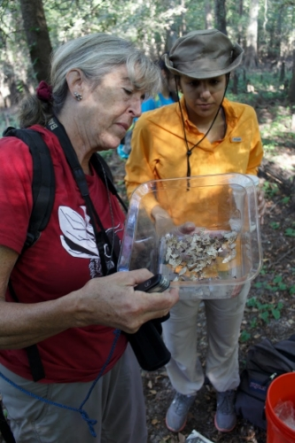 Student looking at a sample from the field with an expert.