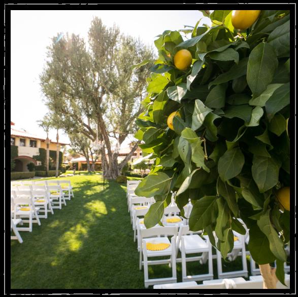 Lemon tree at Mediterranean garden themed wedding