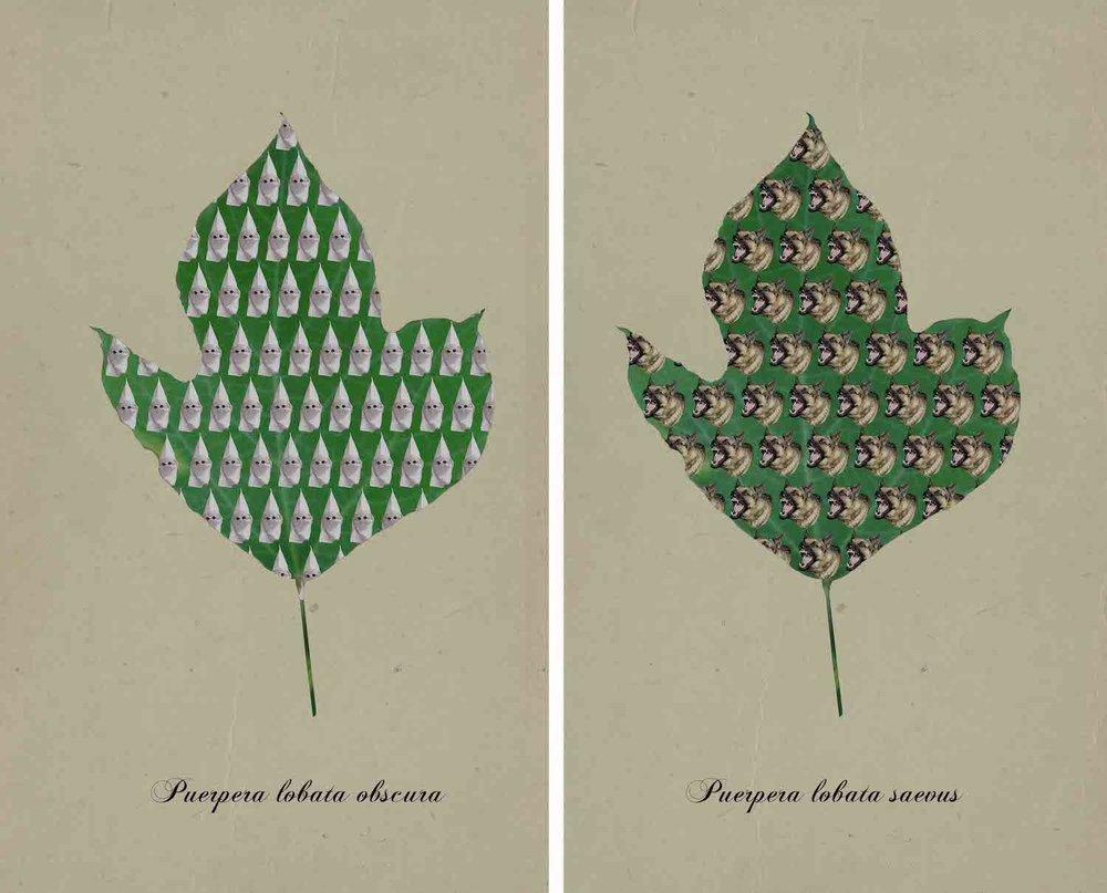 Kudzu Botanical Prints