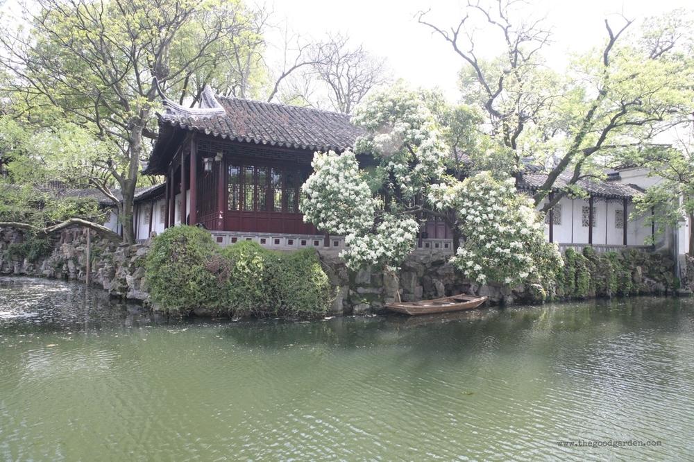 thegoodgarden|surgingwavegarden|suzhou|6015.jpg
