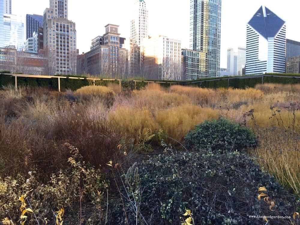 thegoodgarden|luriegarden|chicago|1500.jpg