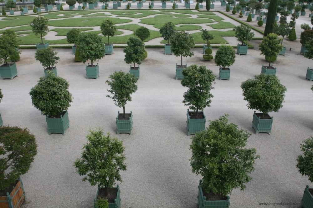 thegoodgarden|Versailles|formal|8760.jpg