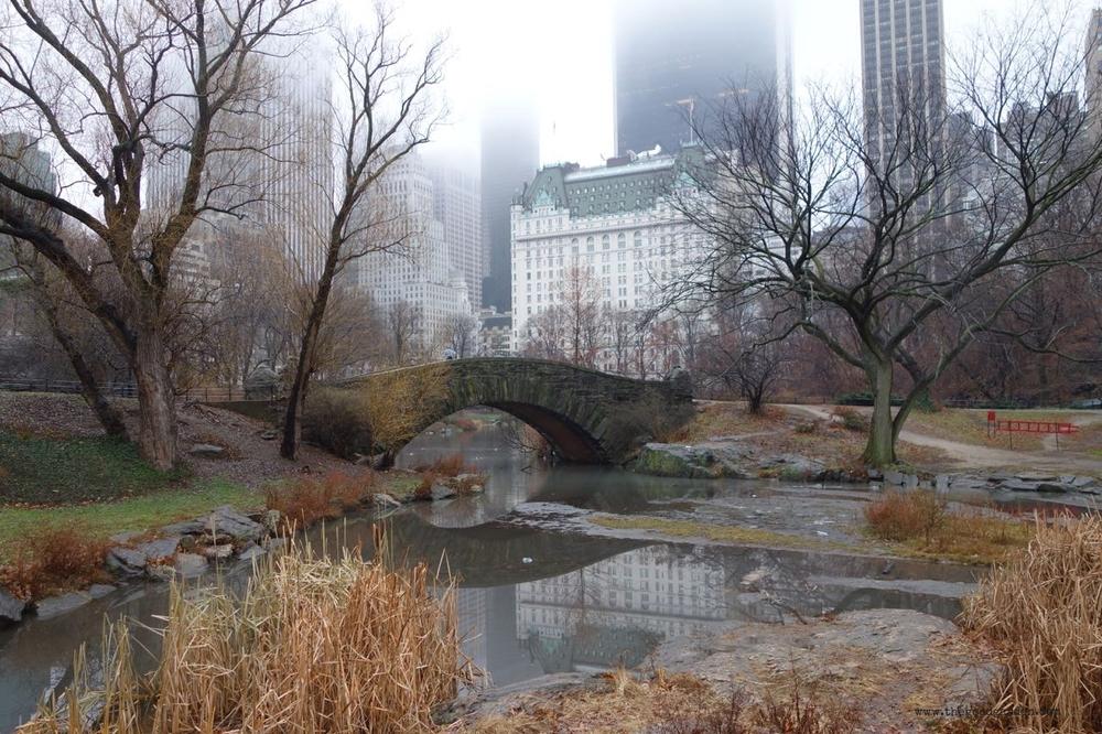 thegoodgarden|centralpark|NYC|4668.jpg