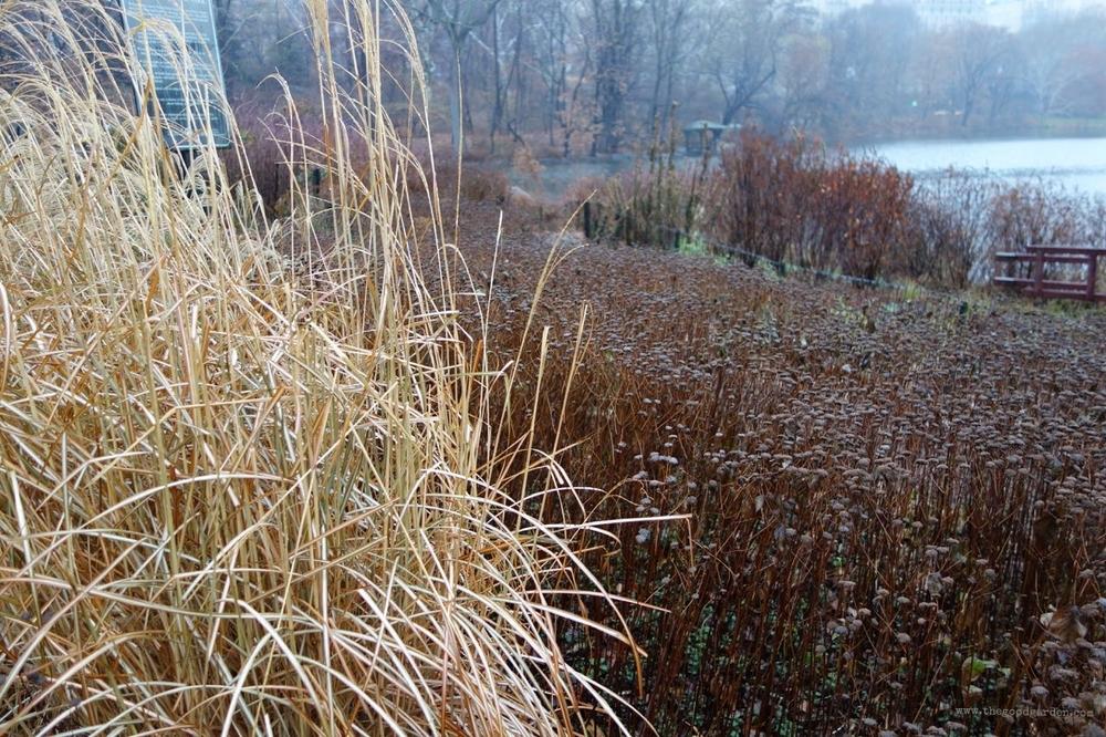 thegoodgarden|centralpark|NYC|4583.jpg