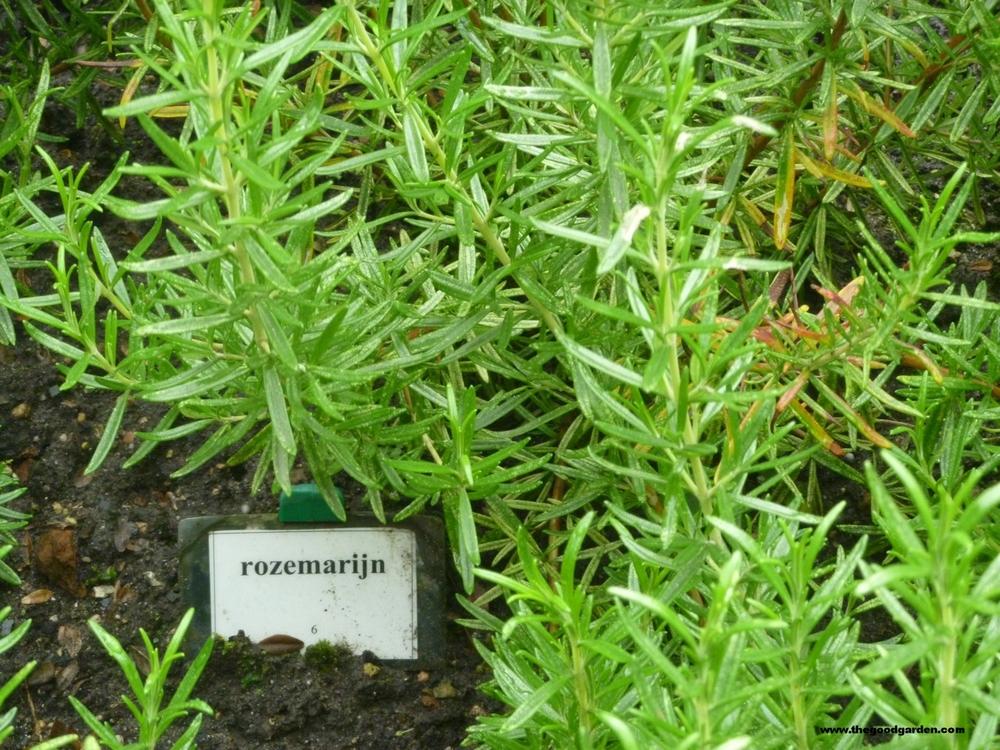 thegoodgarden|utrecht|cloistergarden|30200.jpg