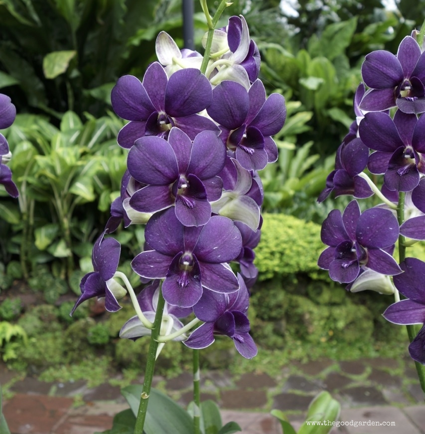 thegoodgarden|singapore|01296.jpg