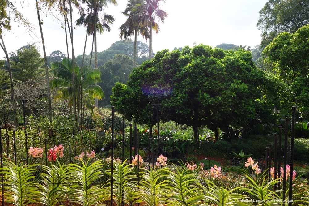 thegoodgarden|singapore|01321.jpg