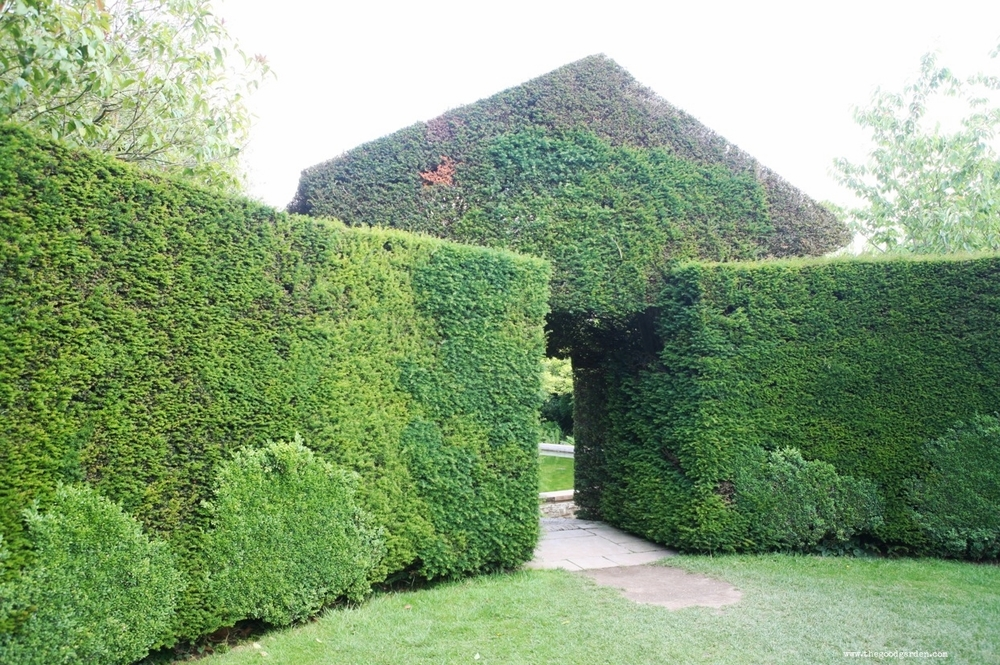 A boxwood and yew hedge in the garden at Hidcote. Gloucestershire, England.