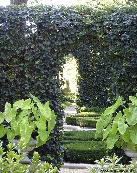 Innovative ivy hedge over a metal frame creates a lush, dark green backdrop for this garden room at Hillwood.  Washington, DC.