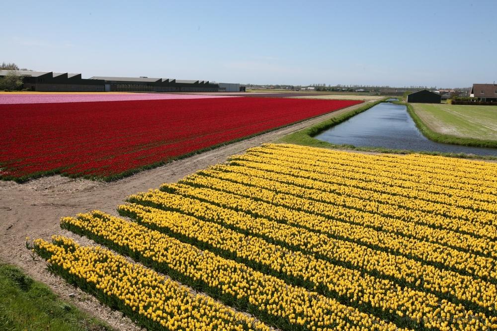 thegoodgarden|tulipfields|netherlands|7017.jpg