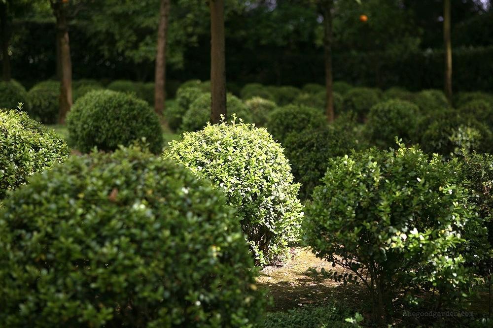 thegoodgarden|landriana|russellpage|4298.jpg