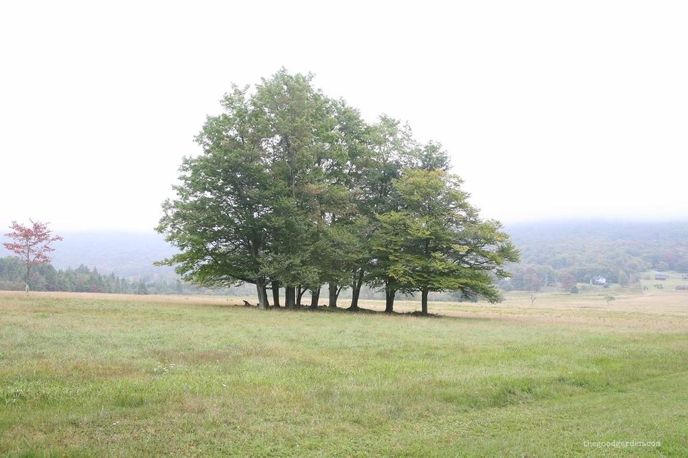 thegoodgarden|canaanvalley|westvirginia|1577.jpg