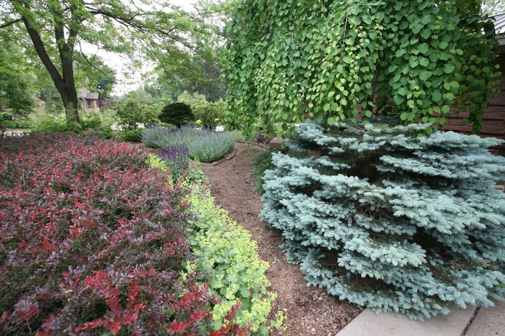 A split in the garden path adds interest, a choice, and also serves a practical purpose of making it easier to maintain the beds.